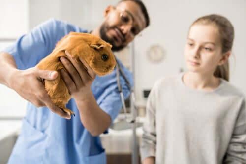 Cincillà dal veterinario.