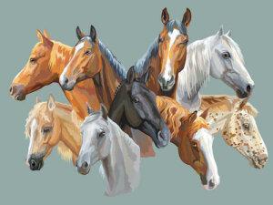 Il colore del mantello dei cavalli: da cosa dipende?