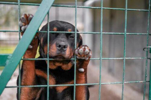 Come denunciare un maltrattamento degli animali.