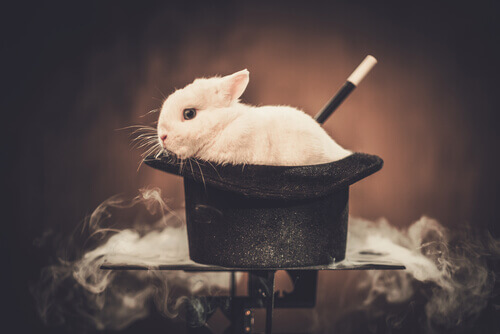 Spettacoli di magia e maltrattamento animale