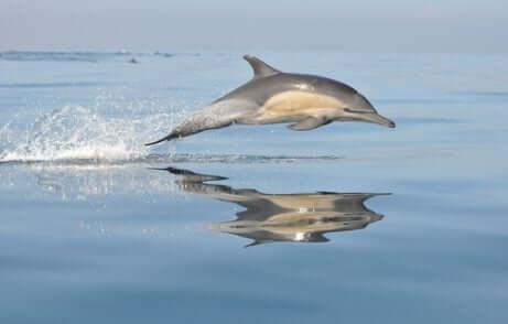 Delfino comune in acqua facendo acrobazie.