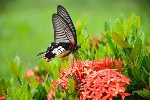 Le farfalle tra gli insetti utili per il giardino.