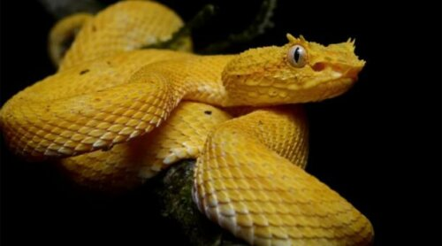 L'isola dei serpenti: uno dei luoghi più pericolosi al mondo