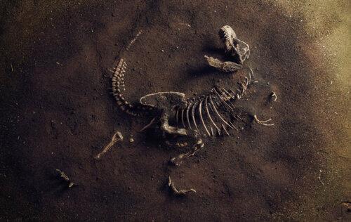 Alla scoperta della paleoecologia, l'ecologia del passato