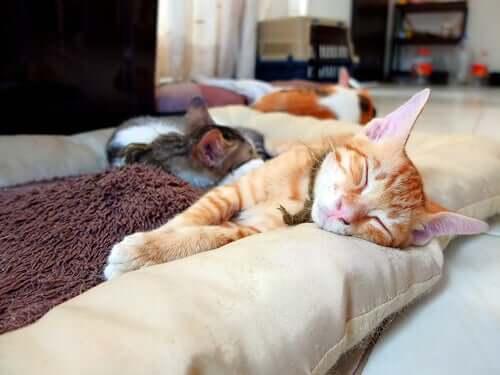 Il gatto in appartamento.