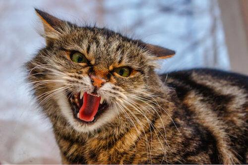 Problemi di comportamento dei gatti: ecco i più comuni