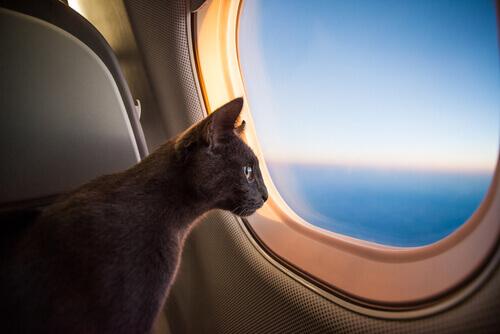 Ecco come i gatti hanno conquistato il mondo