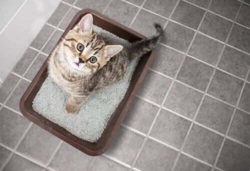 Insufficienza renale nel gatto: sintomi e trattamento