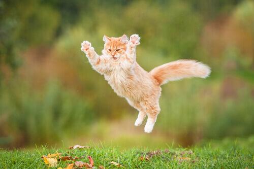 Gatto che salta.