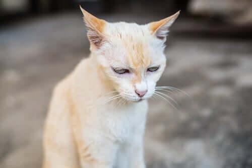 Sintomi della insufficienza renale nel gatto.