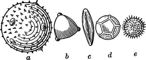 Illustrazione di paleontologia.