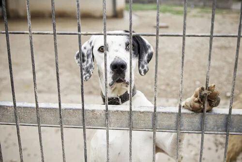 Maltrattamento degli animali e conseguenze legali