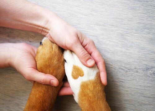 Polizza per animali domestici: quale scegliere?
