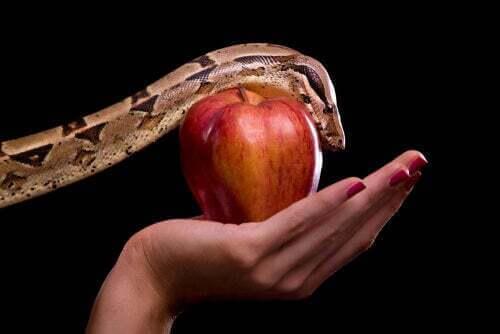 Rappresentazione del serpente e della mela di Adamo ed Eva.