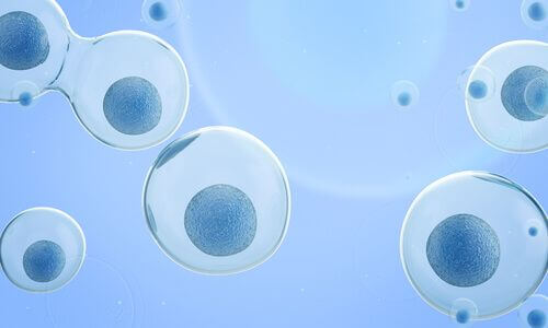 Mitosi cellulare.