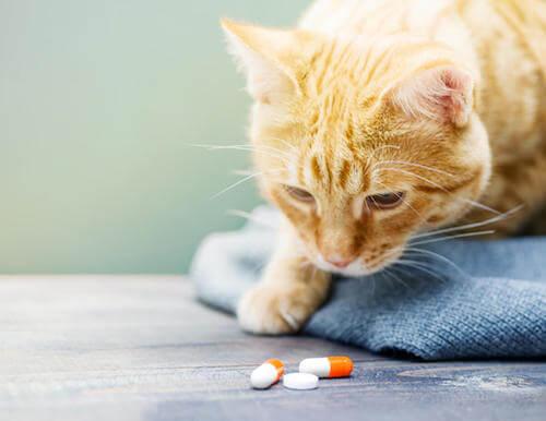 Gatto che guarda delle pillole di vitamine per gatti.