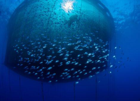 Pesca subacquea con reti.