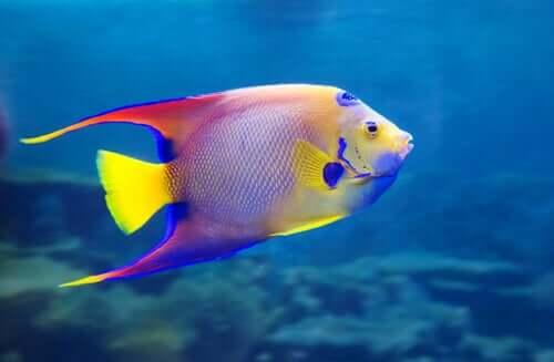 Il pesce come animale domestico.