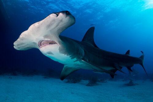Più di 300 specie di squali e razze rischiano l'estinzione