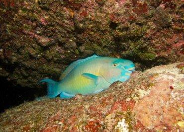 I pesci dormono con un occhio aperto?