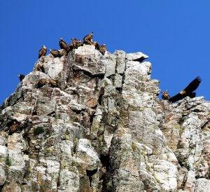 Parchi naturali della Spagna: parco nazionale di Monfragüe.