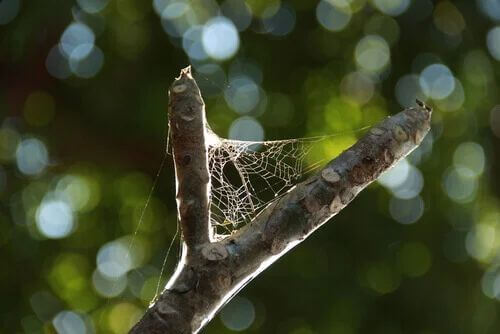 Curiosità sui ragni: la loro ragnatela.
