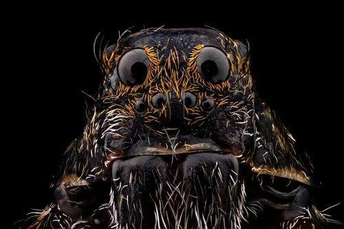 Caratteristiche dei ragni. Ragno con molti occhi.