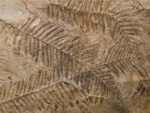 Reperti fossili.