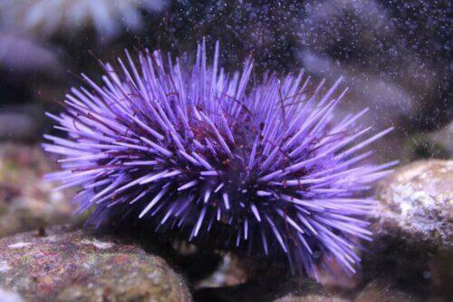 5 curiosità sui ricci di mare: scopriamole!