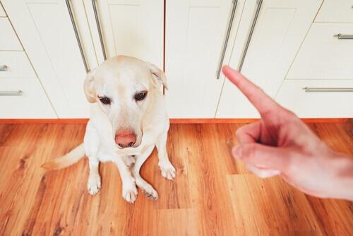 Rimproverare per evitare che il cane scappi.