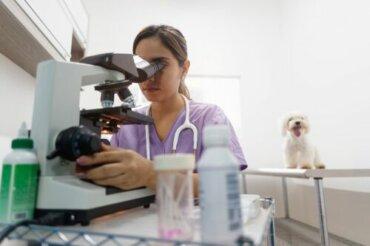 Specialità veterinarie: quali sono le principali?