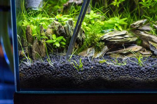 4 tipi di substrato per l'acquario: scegliete quello giusto