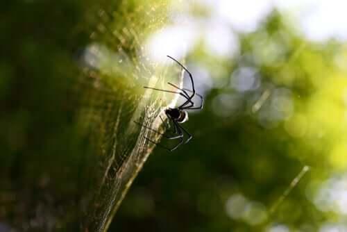 Le tre tecniche di caccia dei ragni