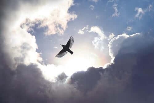 Uccello che vola tra le nuvole.