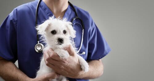 Denunciare il veterinario: quando e come?