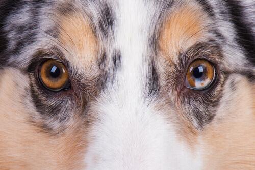 La vista dei cani.