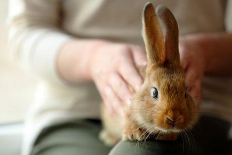 Coniglio che viene accarezzato.