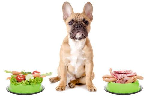 Cane tra due ciotole piene di cibo.