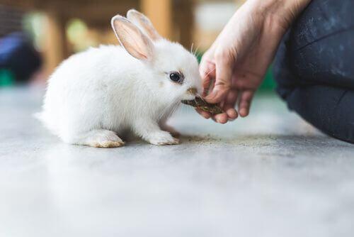 Alimentazione dei conigli e spinaci.