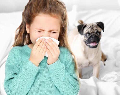 Bambina che si soffia il naso perché allergica ai cani.