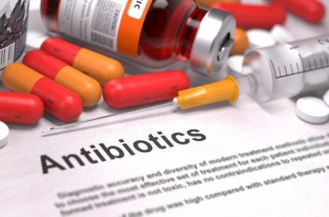 Cosa fare se il vostro coniglio vi morde: antibiotici.