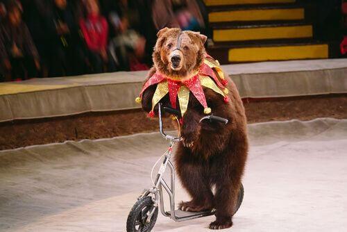 Benessere animale nell'Unione Europea per gli animali del circo.