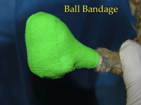 Bendaggio ball-bandage per volatili.