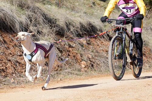 Praticare bikejoring con il cane.