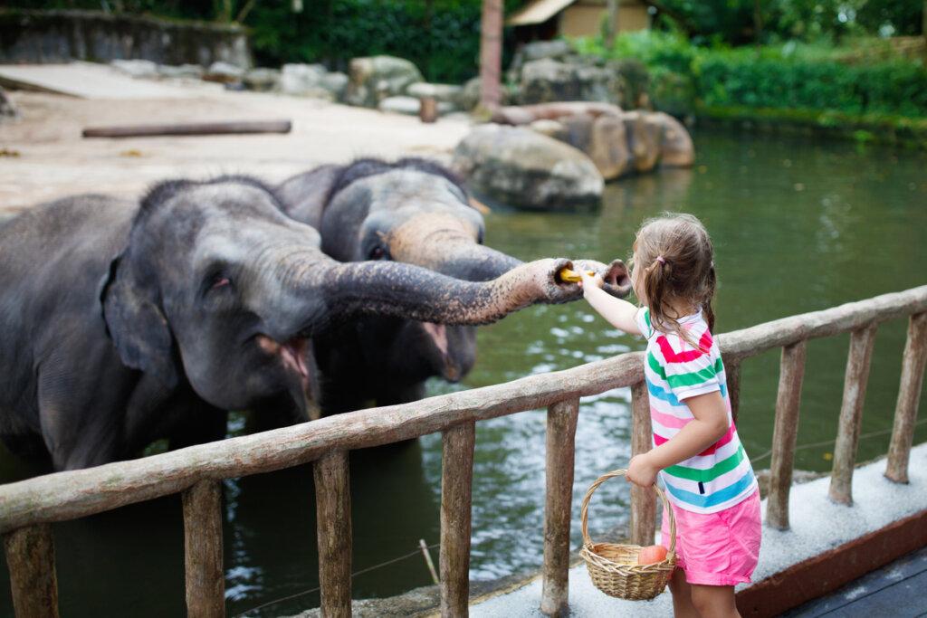 Come mantenere il benessere degli elefanti in cattività