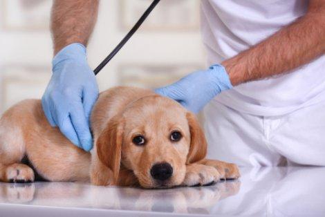 Eccesso o carenza di vitamina D: cane sottoposto a visita veterinaria.