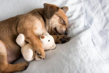5 consigli per aiutare il vostro cucciolo a dormire tutta la notte