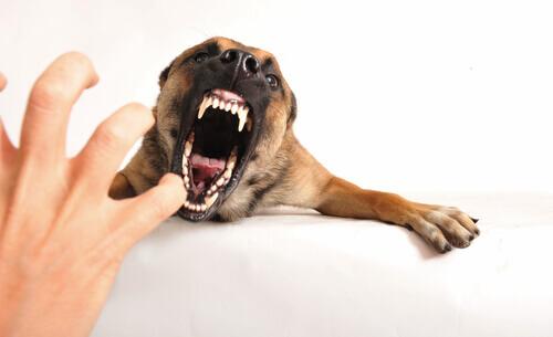Il significato del ringhio nei cani: conoscerlo per capirli meglio