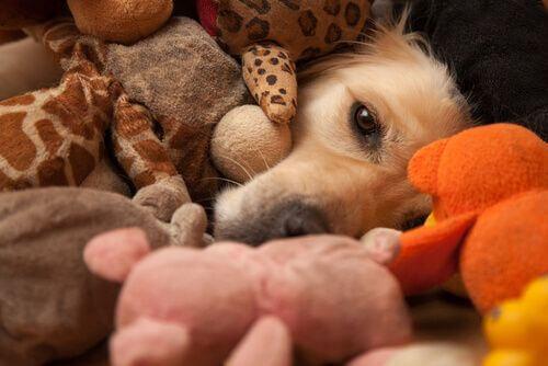 Vivere con più animali in casa, arricchimento ambientale.