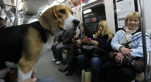 Viaggiare col cane sulla Metro.